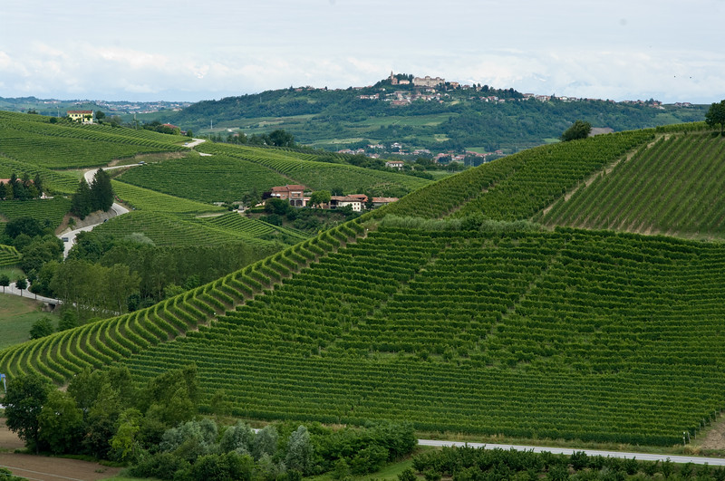 View of the Gaia-Principe vineyard from the balcony of the Prinsi winery in the Barbaresco wine region in the Piedmont, Italy. Gaia-Principe vineyard is named after the gravel road that runs alongside the vineyard. The road gets its name because it traverses the Angelo Gaia and Prinsi properties, hence Gaia-Principe.