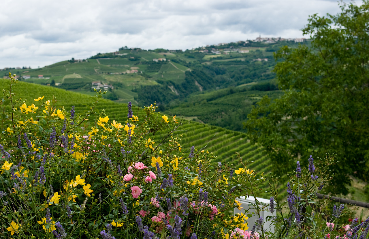 Flowers and vineyards in Serralunga d'Alba in the Piedmont, Italy.