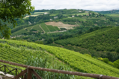 View of vineyards that surround the town of Serralunga in the Piedmont region of Italy.