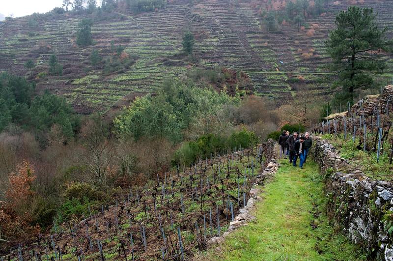 It's good exercise walking the vineyards of Ribeira Sacra.