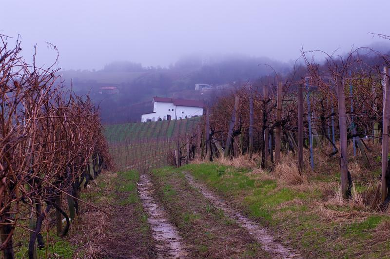 The vineyards of Amestoi in D.O. Getariako Txakolina.<br /> (Pentax K20D with FA 50mm f.1.4 lens)