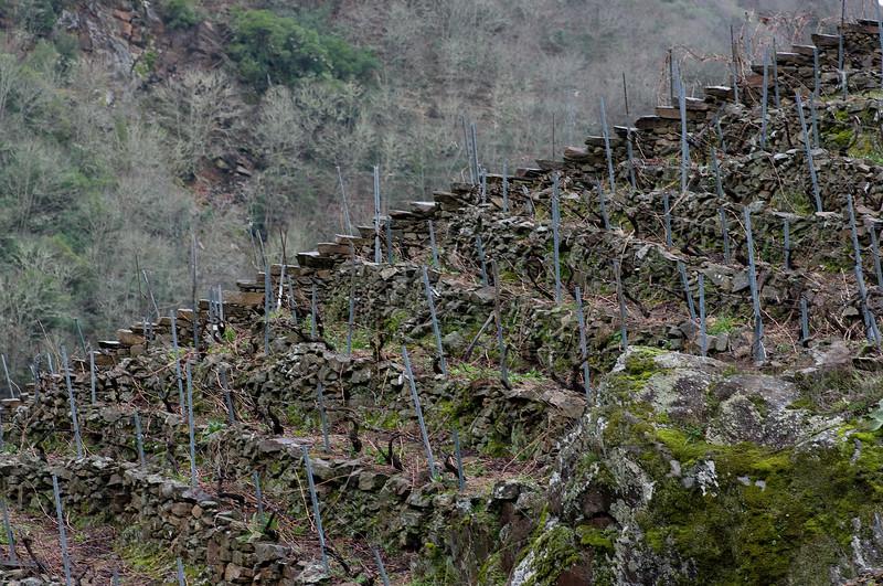 The vineyards of Ribeira Sacra.<br /> Pentax K20D with DFA 100mm lens)