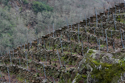 The vineyards of Ribeira Sacra. Pentax K20D with DFA 100mm lens)