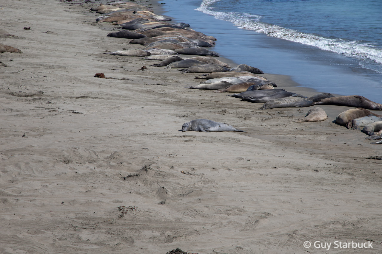 Elephant Seal Viewing Area