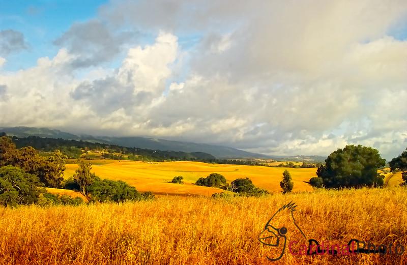 Arastradero Nature Preserve (Park), Palo Alto, California. Gathering storm over San Francisco Bay Area foothills in California forming a scenic vista,