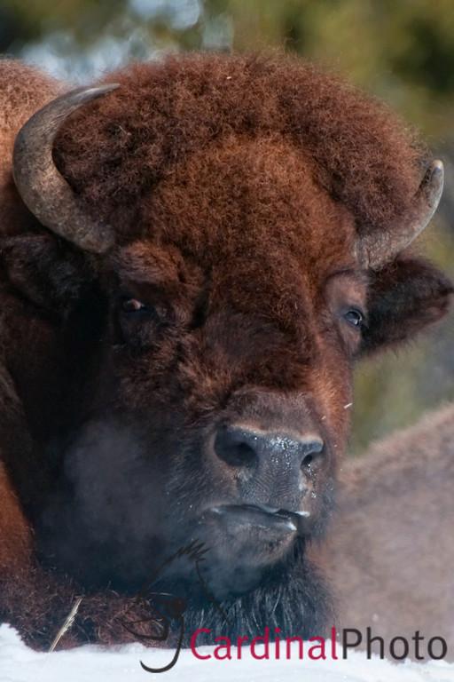 Yellowstone Scenics and Wildlife