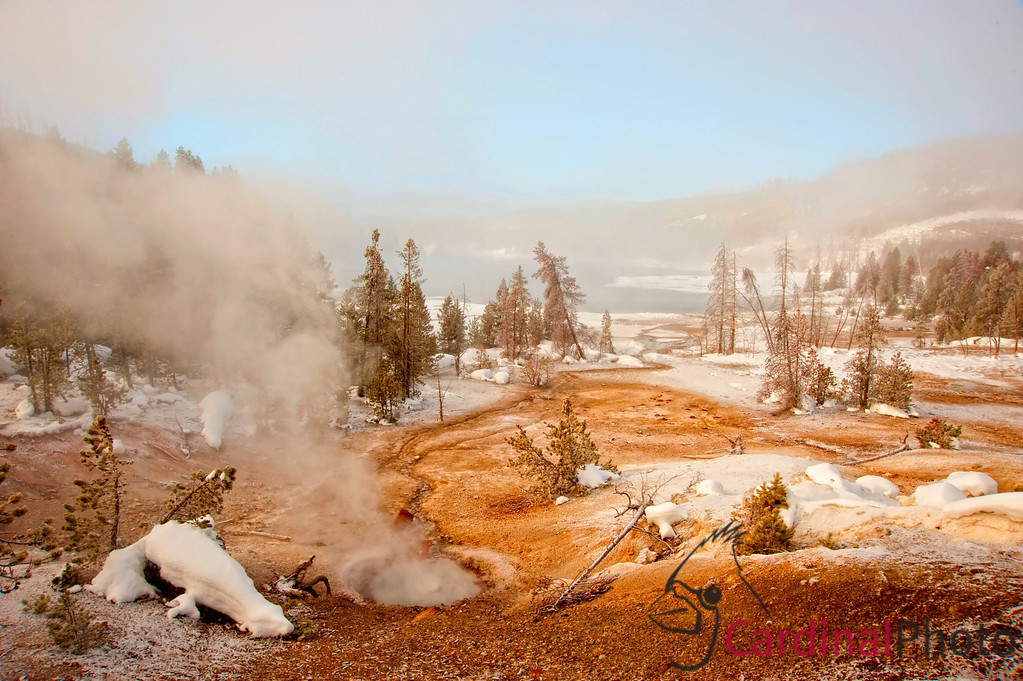 Norris Geyser Basin Geothermal Area in Yellowstone National Park showing Geysers and Hot Pools, Landscape Scenic