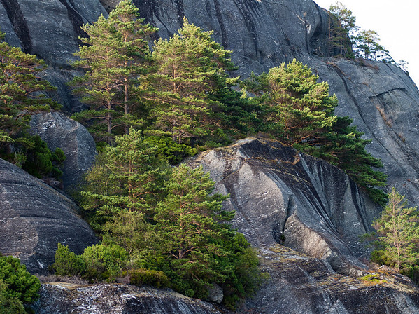 Trees appear to grow straight out of the rocks, Hardangerfjorden