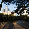 Shadows, trees and high-rise offices, Haeundae Beach, Busan