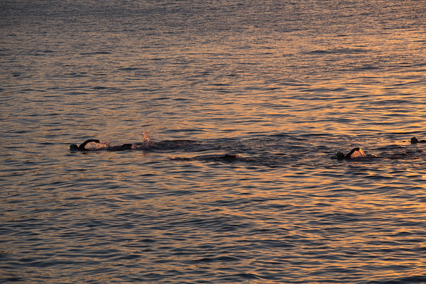 Dawn swimmers return. Haeundae Beach, Busan