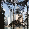Tall trees and taller office blocks - Haeundae - Busan - South Korea