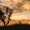 Tree against sunlit clouds