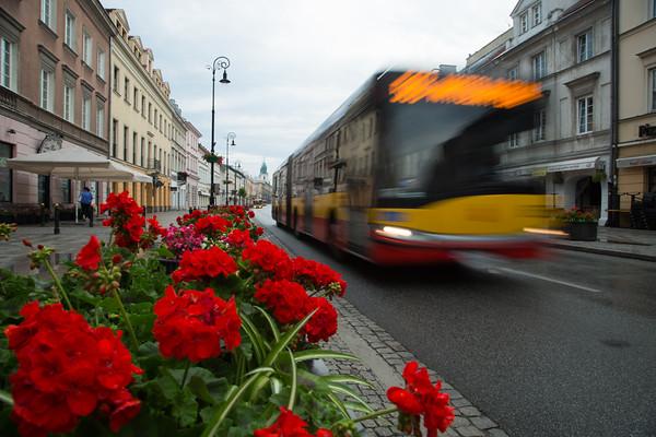 Pelargoniums and bus, Krawkowskie Przedmiescie, Warsaw, Poland