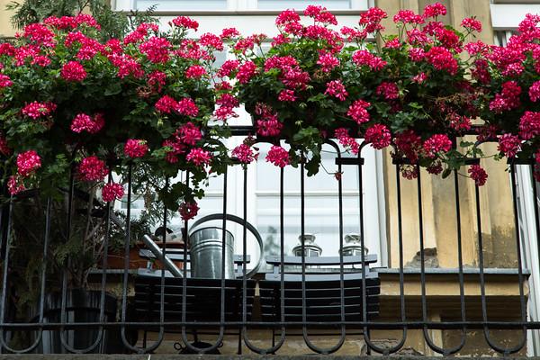 Pelargonium covered balcony, Warsaw, Poland