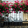 Pelargonium covered balcony, Warsaw, Poland