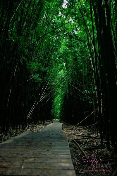Kīpahulu Bamboo Forest on the Pīpīwai Trail. © 2015 Sugar + Shake