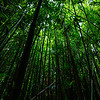 Kīpahulu Bamboo Forest on the Pīpīwai Trail. © 2015 Sugar + Shake