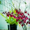 Beautiful greenhouse orchids. © 2013 Sugar + Shake