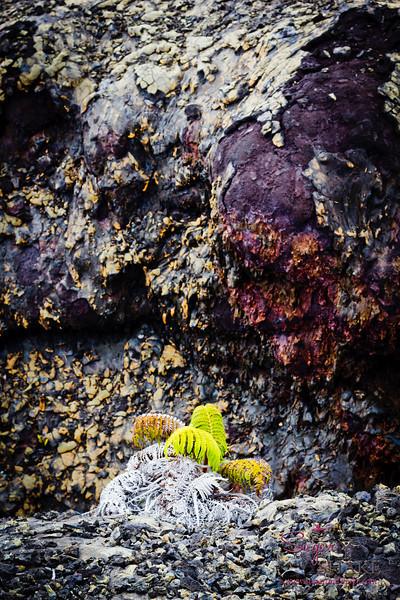More life on the lava field. © 2012 Sugar + Shake