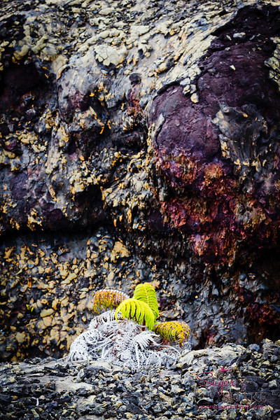 More life on the lava field. © 2012 Sugar + Shake