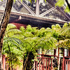 "Out of the Park and back to our volcano jungle retreat, <a href=""http://kipuka-cottage.squarespace.com"">Kipuka Cottage</a>. © 2012 Sugar + Shake"