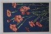 Postcard Margaaret C to AC Stebbins Eveline Orchards  1953