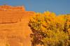 Moab Gold Rush
