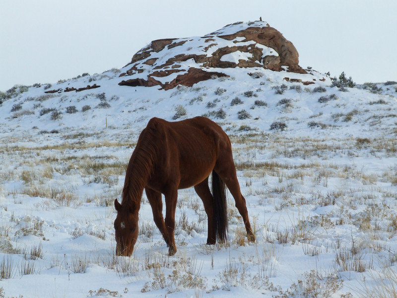 A Red Horse in Red Rock Country