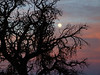 Sunset/Moonrise in Canyonlands