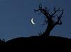 Moonrise, White Rim