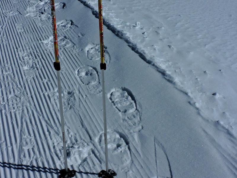 Look at those mini snowshoe prints!!!