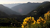 Alpine Sunflowers overlook the route<br /> we climbed at 2 a.m. to catch <br /> sunrise at Ice Lakes.