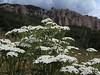 Wildflowers in the Cimarron