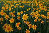 A veritable garden of wildflowers