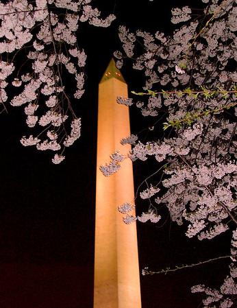 washington monument, washington dc, night, cherry blossoms