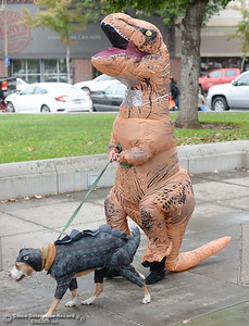 Tyrannosaurus Rex Kameron Davis of Chico walks with her dog during Treat Street in downtown Chico, Calif. Monday Oct. 31, 2016. (Bill Husa -- Enterprise-Record)