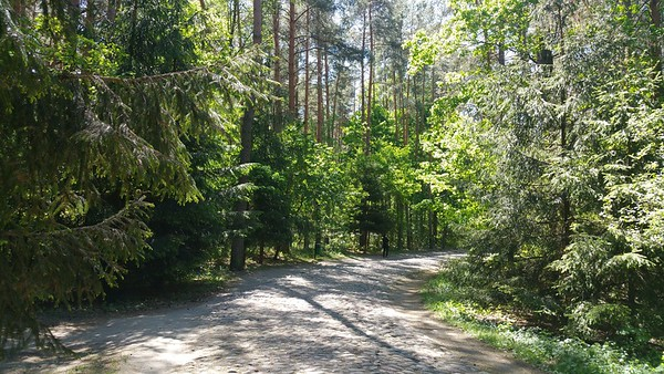 A bit similar to Sobibor where you walk through an avenue to get to the camp or what`s left of it.