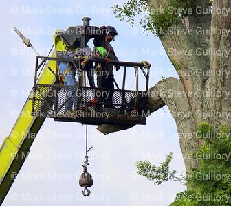 Tree Felling, Lafayette, Louisiana 05262021 -102