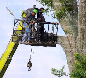 Tree Felling, Lafayette, Louisiana 05262021 -101