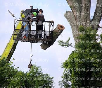 Tree Felling, Lafayette, Louisiana 05262021 -103