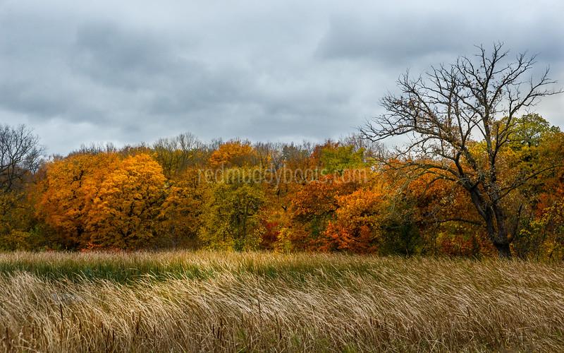 Windy Autumn