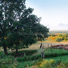 Eden's Pasture