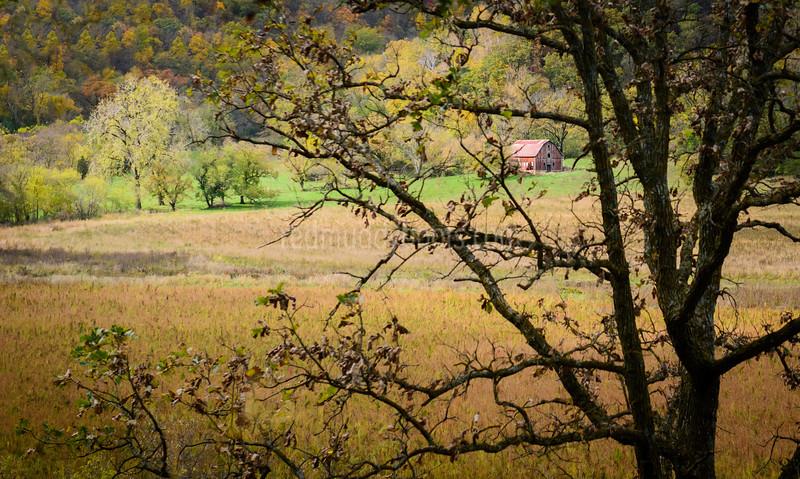 Through the Old Oak Tree
