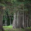 Ballad of the Trees