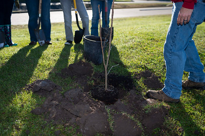 Tree Planting_Crenshaw_Preston__2020_017