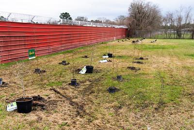 Tree Planting_Satsuma_2021_016