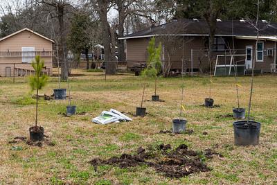 Tree Planting_Satsuma_2021_007