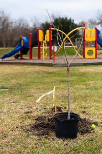 Tree Planting_Satsuma_2021_005