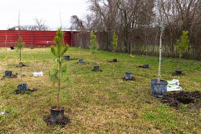 Tree Planting_Satsuma_2021_010