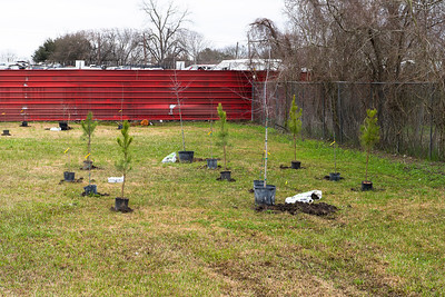 Tree Planting_Satsuma_2021_009